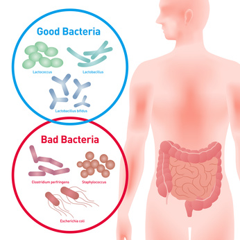 腸内細菌とマイクロバイオーム