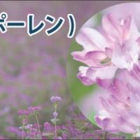 蜂花粉ビーポーレン