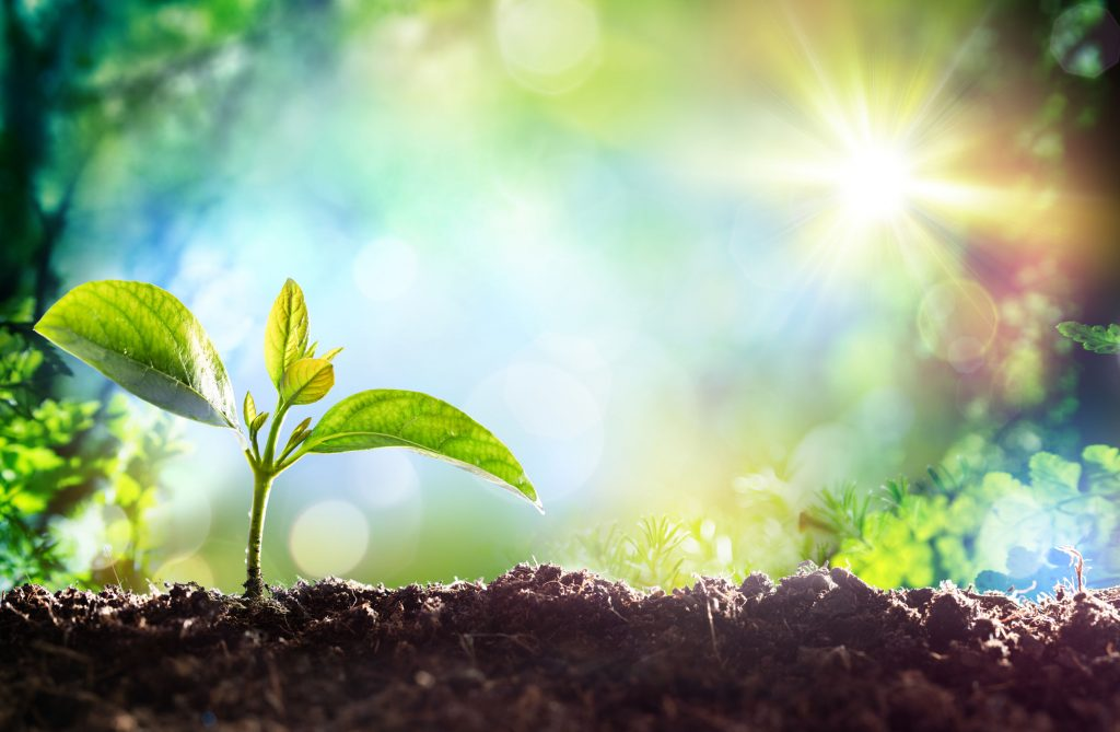 植物食べ物や食事と健康